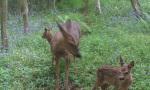 deer contact