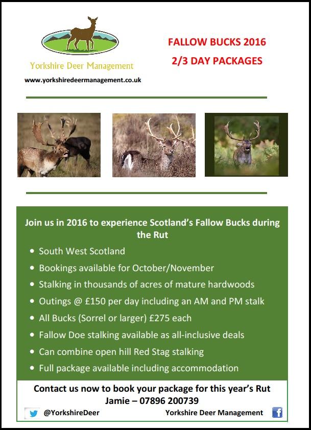 Fallow bucks scotland poster