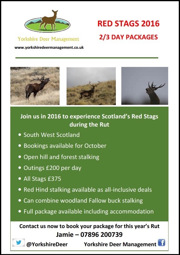 red stag poster 2